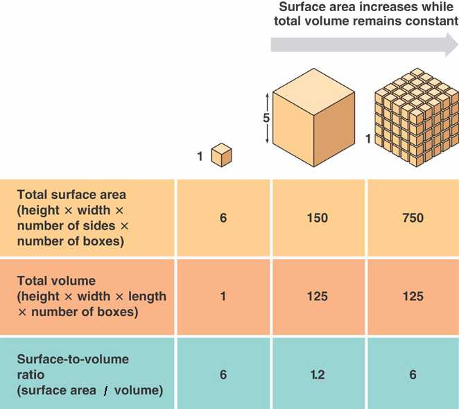 Surface Area And Cell Size: Cell Size Worksheet At Alzheimers-prions.com